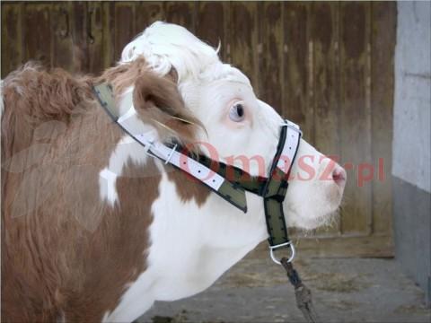 Kantar dla bydła krów Profi